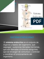 sitema endocrino