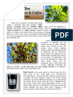 Plant of the Week - Coffee2