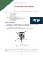 anatomin.doc
