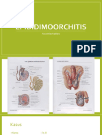 Epididimo Orchitis