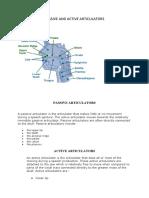 Passive and Active Articulators