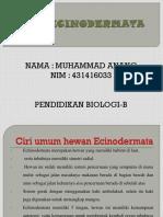 echinodermata Anang