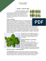 Bosiljak_kraljevska_biljka.pdf