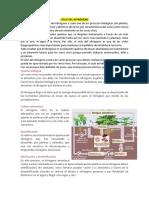 CICLO DEL NITRÓGENO,Fosforo,Hidrologico,Azufre,Cadenaalimenticia,Redestroficas