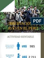 Observacion de Aves en El Peru
