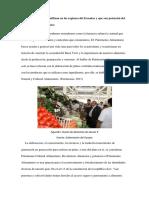 Alimentos del Ecuador que se usan mas en la Gastronomía