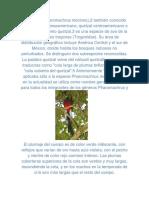 El quetzal.docx