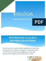 Biológia Respiracion Celular