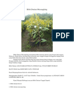 BERMUTU..!Hp/Wa 0822-2022-8118, Pohon Durian Musang King, Bibit Durian Musang King Di Medan,