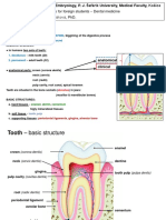 Structure of Tooth 2014 ID Topics