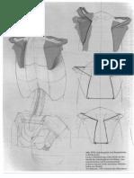 97139969 Gottfried Bammes Die Gestalt Des Menschen Anatomy Amp Visual Arts 3 3