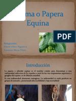 Adenitis o Papera Equina-David Vélez Figueroa