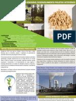 Biomassa Brasil e Energia Renovável Desenvolvimento Projetos Sustentéveis