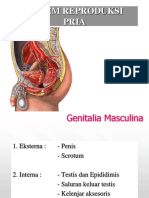 Ppt Anfis - Perkembangan Sel Darah Dan Sistem Limfatik