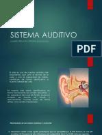 Sistema Auditivo.pptx