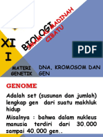 DNA, kromosom