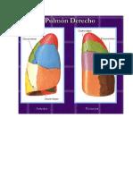 Segmentación Pulmonar Por Tomografía