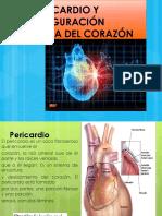 El Pericardio y Configuración Externa Del Corazón