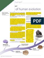 A Timeline of Human Evolution