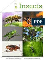 51190582-Insects.ppt