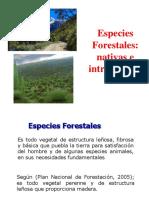 2.2. Esp Forest - Tara