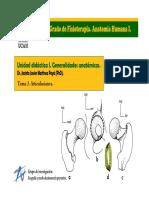 Articulaciones Anatomía