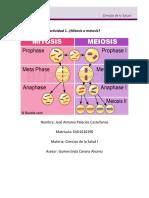 Actividad1. Mitosis o Meiosis U4 Jose Palacios