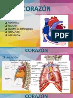 AnatomÍa Corazón