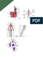 Efectos del masaje sobre los sistemas circulatorio y linfático.docx
