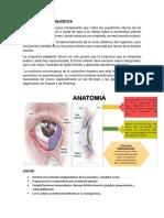 Anatomia de La Conjuntiva