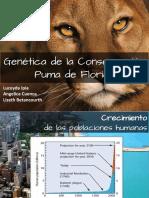 Puma de Florida