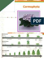 224111_4. Cormophyta pertemuan 3.pptx