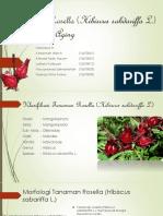 Kelompok 5 Gel Bunga Rosella-1