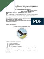 p.a.p. 4 Periodo Tercero Español