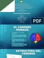 EL CEREBRO.pptx