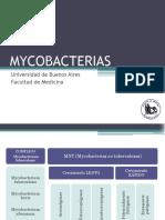 24_micobacterias