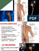 Sistema Nervioso Humano i