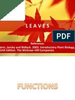 4. plant leaves.pptx