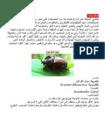 حيوانات حديقةاشكل.docx