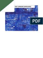 Virtual Slide Histologi Praktikum 2
