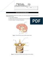 FT - Anatomia SNC