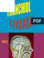 06 Trunchiul Cerebral