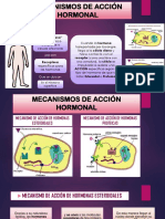Mecanismos de Acción Hormonal