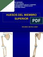 huesosdelmiembrosuperior-130501094050-phpapp02
