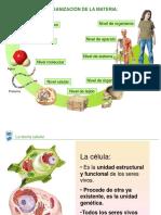 Celula y Funciones Vitales (1)