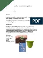 Germinación y crecimiento del garbanzo.docx