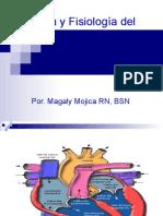 3117914 Anatomia y Fisiologia Del Corazon 111008234333 Phpapp02
