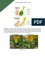 Plantas hermafroditas.docx