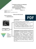 Filo Proteobacteria.pdf