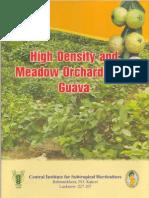 HD-MO Guava